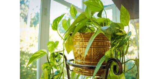 6 Ways to Make Your Home Eco-Friendly