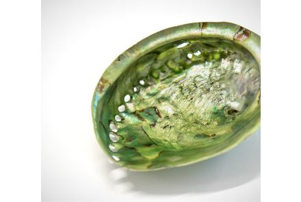 Green Mother of Pearl Shell